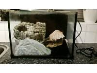 Love fish fish tank with filter and accessories