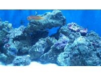220ltr marine fish tank + 104ltr hospital tank Everything included will not split.