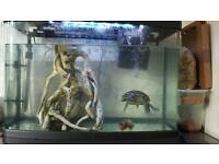 Fish tank aquarium with terapin and one fish and a sucker fish for sale