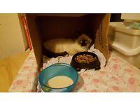 Lost Kitten Sneinton