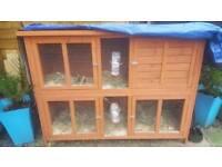 Rabbit hutch, 2 rabbits and rabbit run with accessories