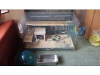 2 MALE DEGUS WITH LARGE CAGE AND ACCESSORIES