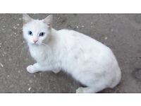 lost my cat pekie