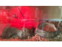 Viv 3 ft 2x heat mat light water bowl 2x caves and wood chippings and lock for cage