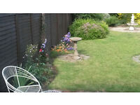 8 used fence panels for sale 6x5 foot - larch lap.