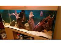 4ft fish tank job lot