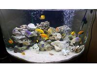 Corner tank 180 litre - Full Malawi Setup inc. Fish