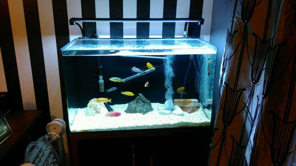 Fish tank 130 litre | in Suffolk | Gumtree
