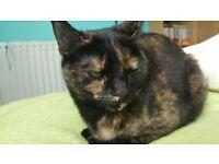, 3 Yr old female tortoiseshell cat needs new home