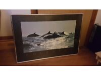 """Framed print of """"Dolphins by Bob Talbot"""""""