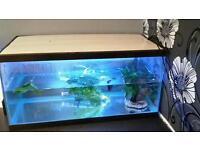 2ft aquarium tanks