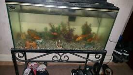 Rio fish tank