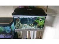 46l fish tank