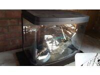 Fish Tank (Love Fish tank) 64L