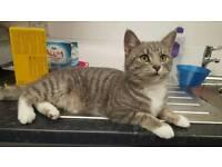 Female missing cat