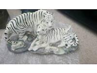 White family tiger/orange family tiger