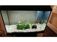Jewel aquarium 60. 80litre with fish