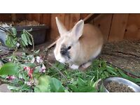 Male and female bunnies for sale