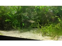 65 litre/14 gallon fish tank with fish, plants, filters, etc