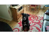 Looking for a new home for my dog sonny be ideal if he had his own garden to play in