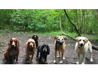 Tailsy's Happy Hounds dog walking services