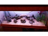 240Ltr Fish tank