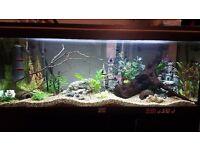 Sell beautiful aquarium 250l