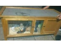 selling large family of guinea pigs 9 members(2 adults + 7 puppyes)