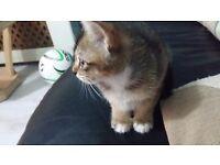 Extremely loving female kitten for sale