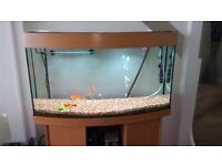 Aquarium, Jewel Vision 180