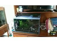 Fully set up shrimp tank