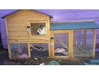 Rabbit & hutch FOR SALE