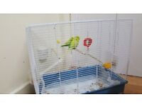 2 Lovely Budgies, with almost new Cage