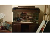 120 litre fish tank n stand