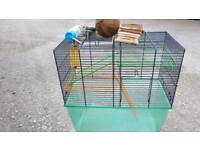 Gerbilarium/hamster cage