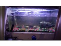 2 1/2 foot fish tank for sale