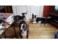 Dog Daycare, Sitting, Boarding Services & Daycare, highly experienced carers. £20 per day.