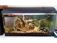 Aquarium with full equipment, fish and ornament and many more
