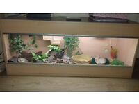 4ft tank/viv, accessories male bearded dragon 6yrs old