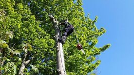Qualified tree surgeon and hedges cutting