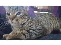 Beautiful Baby Kitten For Sale.