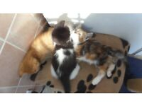 Frisky Friendly kittens