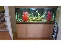 5ft tropical fish tank