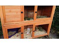 2 lionhead rabbits plus 2 tierd cage and run