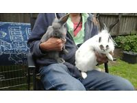 3 beautiful baby bunnies looking for new homes.