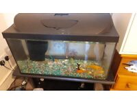 GOLDFISH FOR SALE TANK INCLUDED