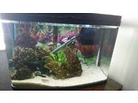 Fish tank job lot