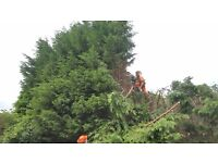 ## TREE Surgeon wanted hull area ##