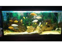 Fish tank full set up plus fish