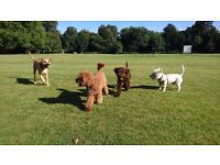 Dogwalker / Driver required!